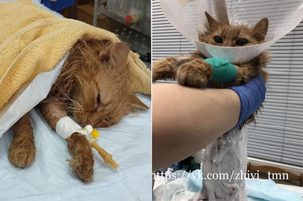 Врачи боролись за жизнь кота больше двух дней