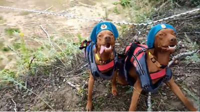 За ВДВ: спортивный тренер нарядил собак в голубые береты и прокатил на тренажёре