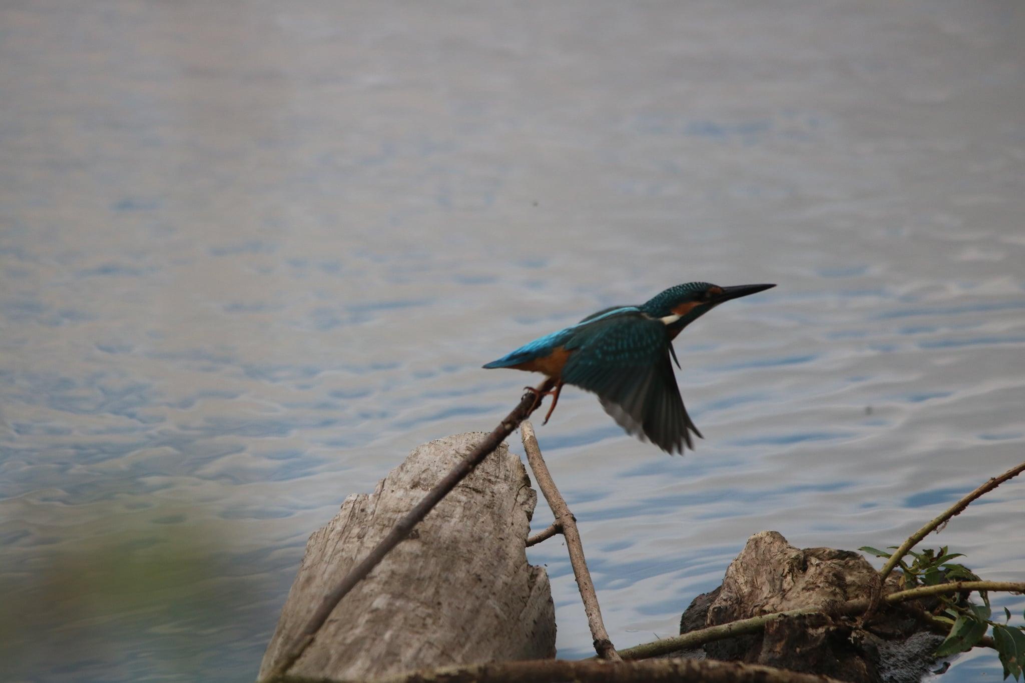 Многие верят, что встретить такую птицу — к удаче