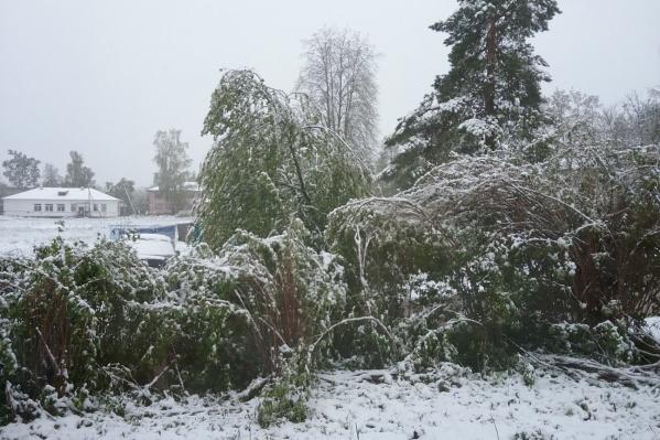 Снег для жителей Переславского района выпал неожиданно