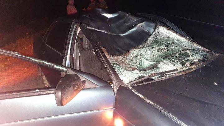 В Прикамье в аварии с лосем погибла девушка