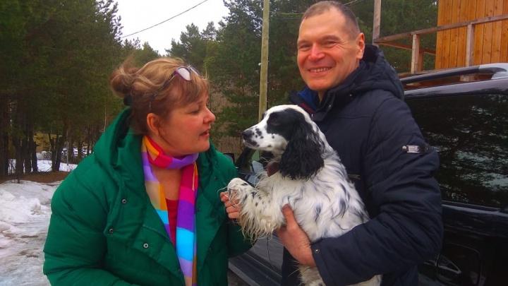 «Оглянулся и ушёл»: пёс, найденный Андреем Барышевым, остаётся жить с депутатом