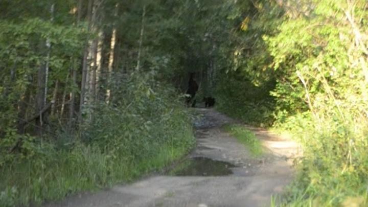 На Южном Урале на туристов, возвращавшихся с Таганая, вышла семья медведей