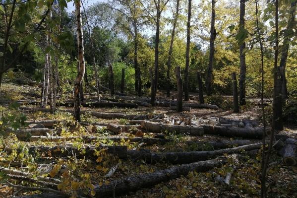 Одни деревья вырубают, другие — кронируют
