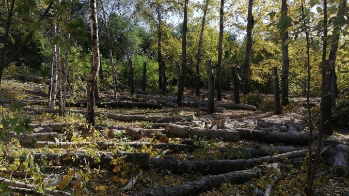 Омичи сначала пожаловались на опасные деревья в Советском парке, потом — на их массовую вырубку