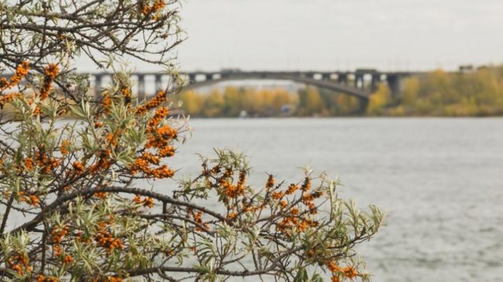 Предстоящая неделя в Красноярске будет пасмурной и дождливой