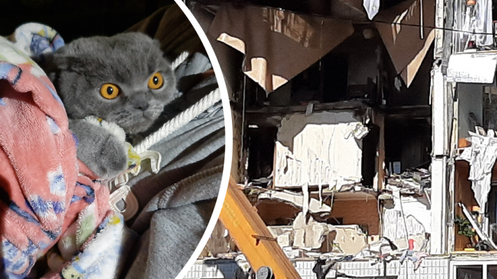 «Из-за шока даже не шевелился»: спасённый из взорвавшегося дома котик отыскал своих хозяев