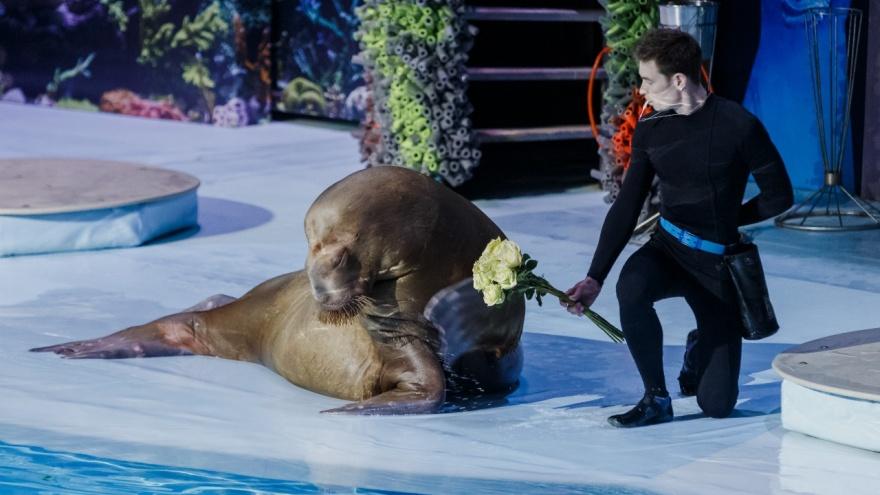 Сегодня отмечают День моржа — в Новосибирске нашлась одна моржиха. 10 фото забавной звезды дельфинария