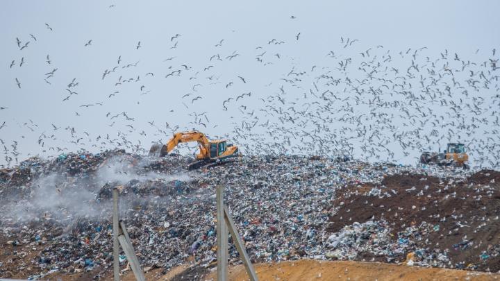 Птичий хутор. Почему к еще строящемуся Мясниковскому МЭОКу уже везут весь мусор Ростова