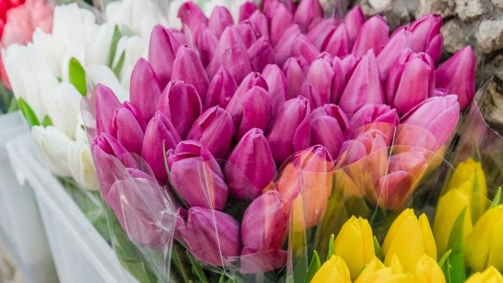 В Перми уничтожили партию цветов, зараженных опасным вредителем