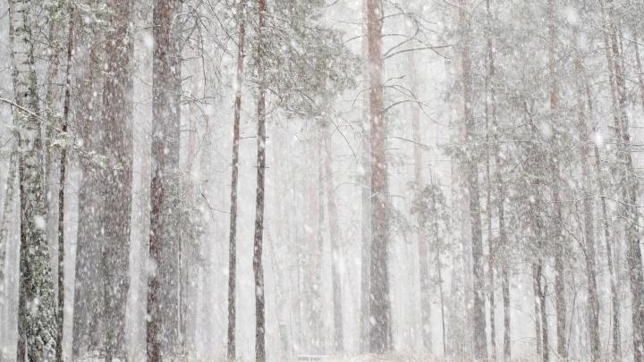 В Академгородок пришла зима. Жители лепят снежки, а животные радуются внезапным сугробам — 10 милых фото
