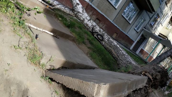 Во время бури в Новосибирске пострадали четыре человека