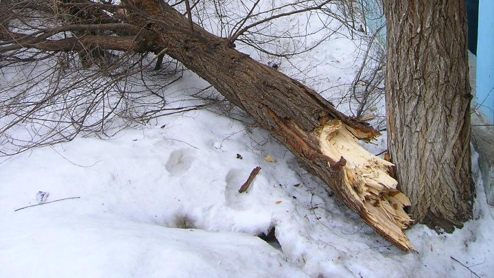 Сильный ветер в Волгограде разметал большие деревья