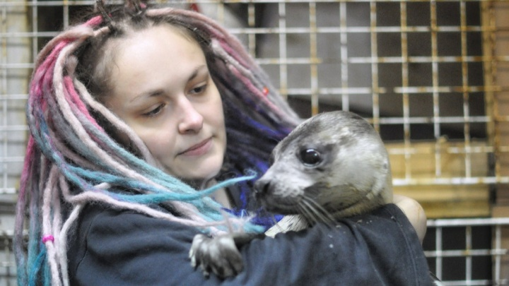 «Президента пригласили в центр, которого ещё нет»: где в Архангельске будут спасать тюленей