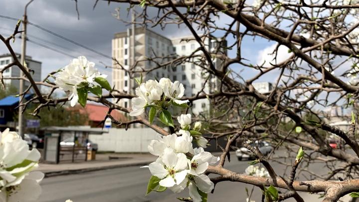 В этот раз без снега: какая погода будет на майских праздниках