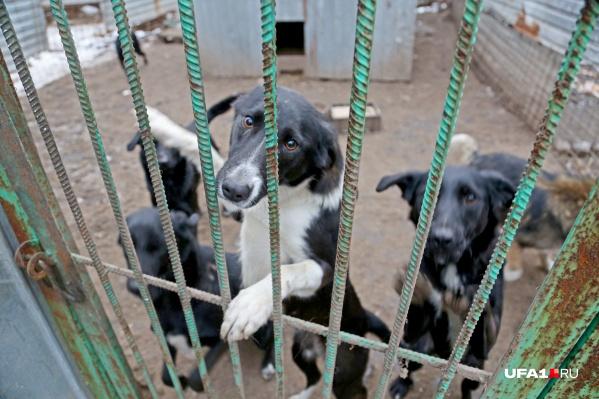 Официальных приютов для бездомных животных в республике нет, пока что ими занимаются только волонтеры