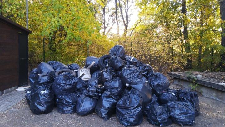 «Собрали полтонны за два часа»: волгоградцы расчистили Волго-Ахтубинскую пойму от мусора