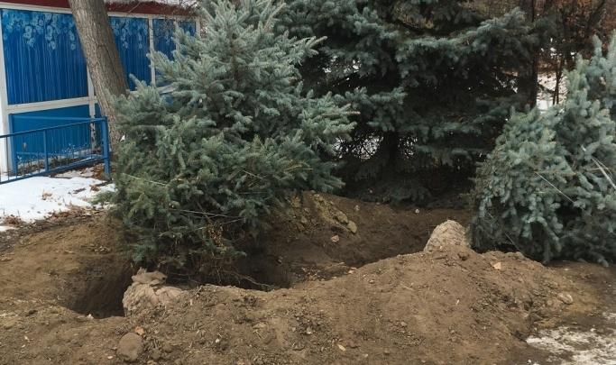 Пустырь в центре Волгограда засаживают «спящими» елками