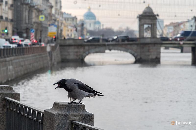 Реки так и не успели замёрзнуть. Санкт-Петербург, 11 декабря 2019 года