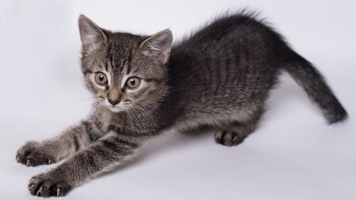 «Собаки съели всех кошек»: в Волгограде бездомные животные уничтожают друг друга