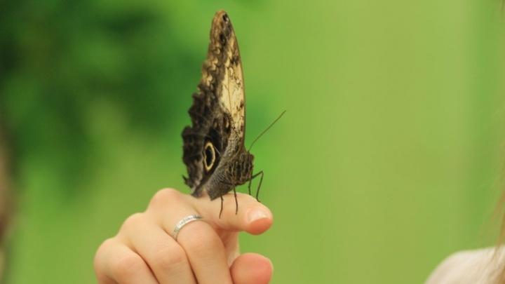 От нефтебазы и пилорамы до фермы бабочек: какой готовый бизнес продают в Перми