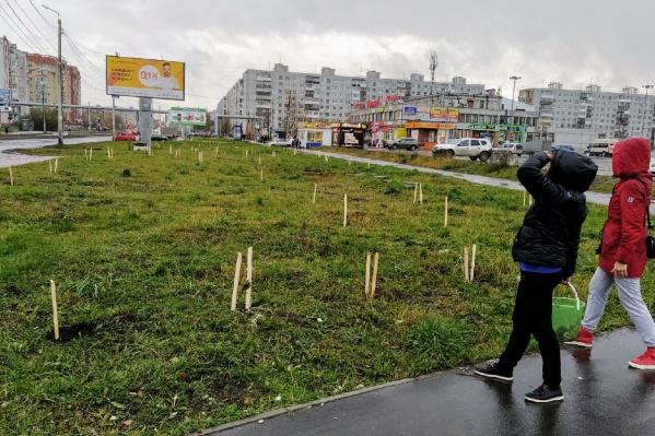 «Живой город» занимается посадками на общественных территориях, но мечтает о появлении долгосрочных и комплексных планов по озеленению