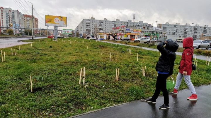 Появится главный садовник? Архангелогородка обсудила с новым главой озеленение города