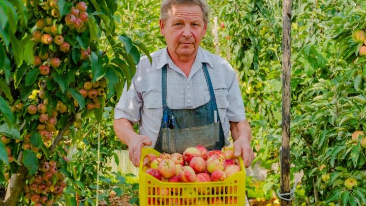 Под Пермью пенсионер разбил свой яблоневый сад — в нем более 110 сортов