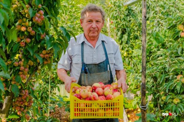 Основной участок, где Сергей Иванович выращивает яблоки, находится под Краснокамском