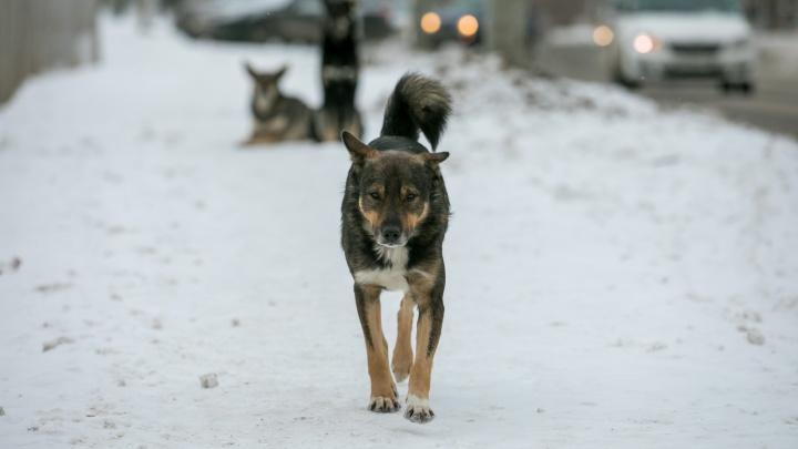 Общественники объявили награду в 100 тысяч рублей за информацию о мучителях бездомных собак