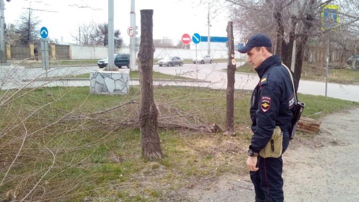 «Это целая банда»: волгоградцы с помощью полиции остановили «черных лесорубов»