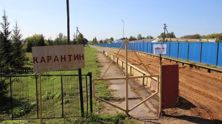 Птицефабрика «Иртышская» будет заводить новое поголовье после птичьего гриппа