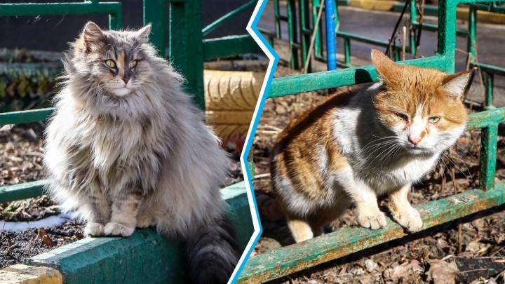 Котовирус: фотоподборка котов, котиков и котищ с улиц Нижнего Новгорода