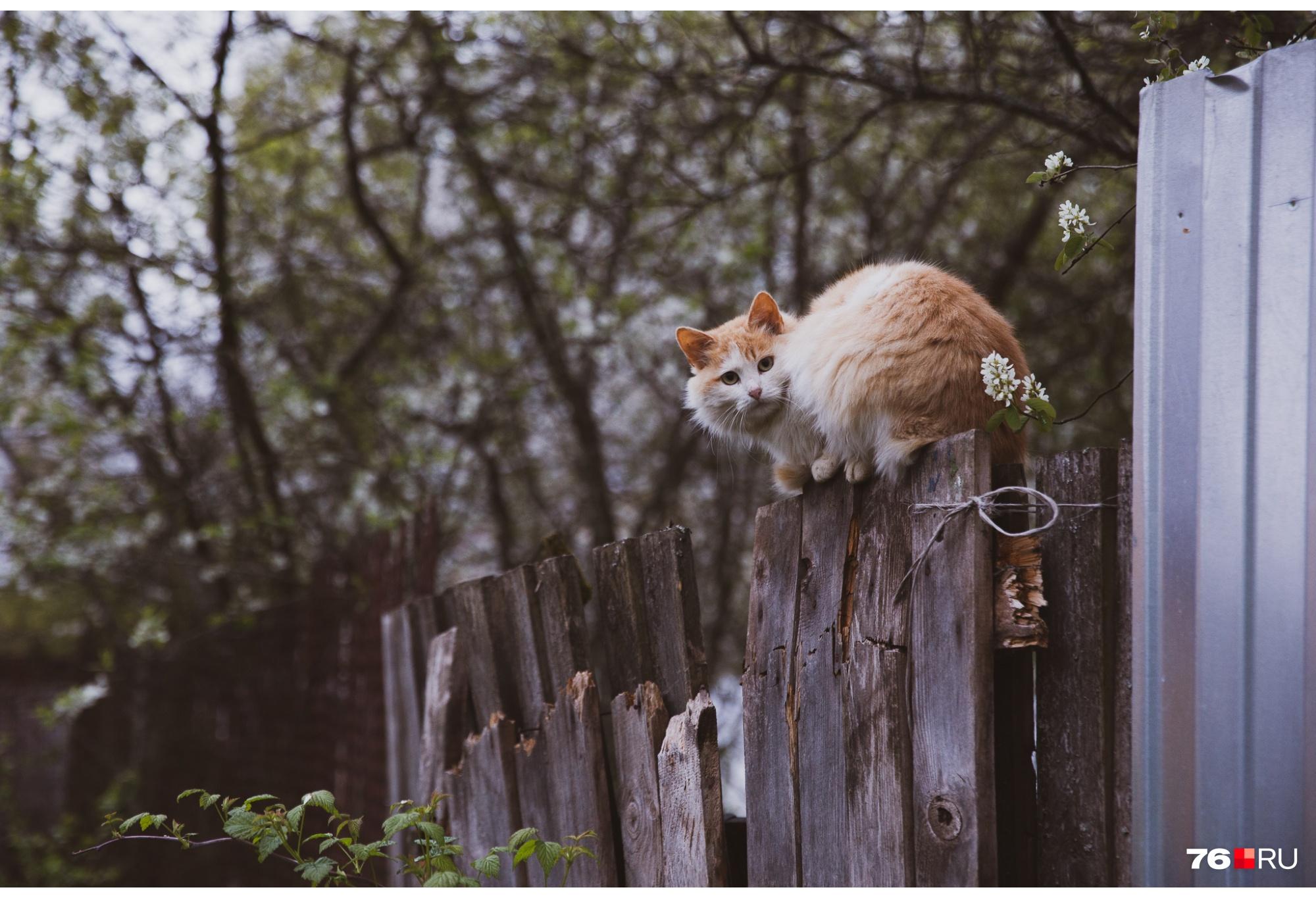 Привет, кот!