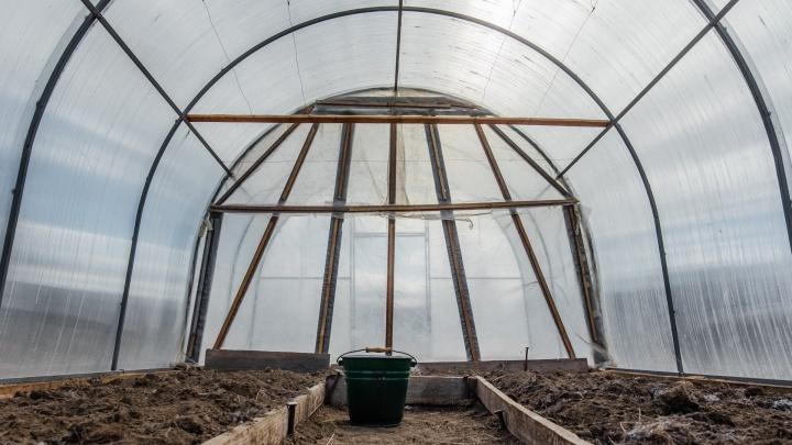 Под Пермью построят тепличный комплекс для выращивания огурцов, томатов и зелени