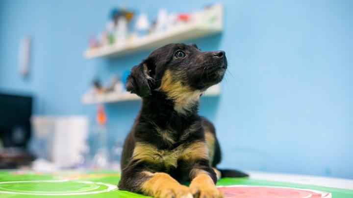 Общественники выиграли грант в 5 млн на бесплатную стерилизацию беспризорных кошек и собак