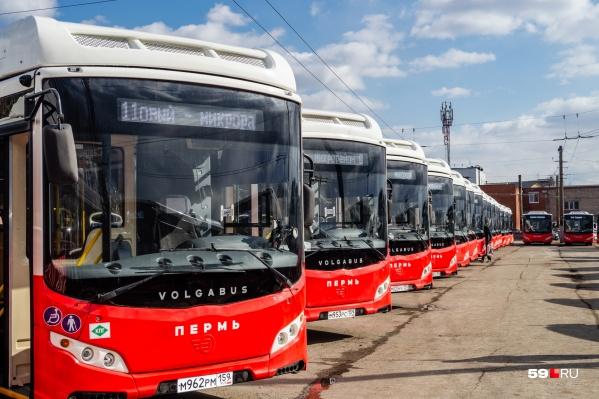 «Волгабасы» пополнили пермский автопарк в прошлом году