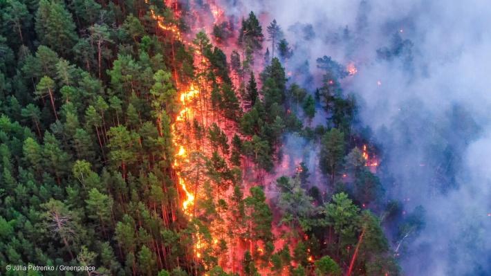 Летом 2020 года регулярно появлялись сообщения о пожарах в сибирских лесах. Что будет в этом году, климатологи даже не берутся предсказать