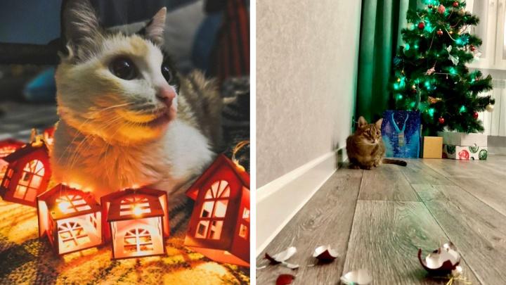 Милашка под елочкой: весь день публикуем фотографии ваших домашних животных в новогоднем антураже