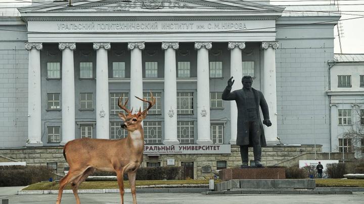 Рысь на 8 Марта и кабаны на Ленина. Как будет выглядеть Екатеринбург, когда превратится в Зверополис