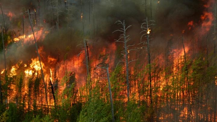 В Миассе ввели режим ЧС из-за лесных пожаров, убирают палатки туристов
