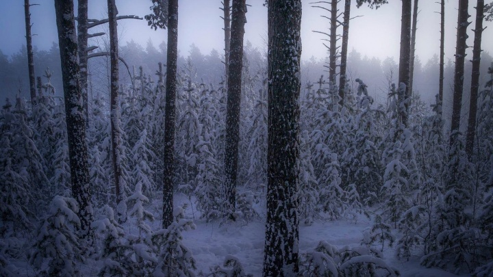 Второй день аномальных морозов: ледяные обливания, дубак-челлендж и прогноз синоптиков. Онлайн-репортаж