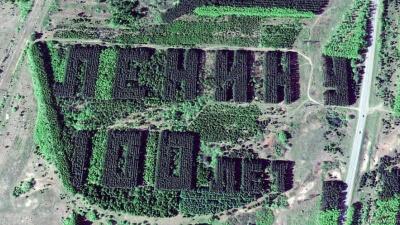Наследие СССР: разглядываем надписи из деревьев в Башкирии