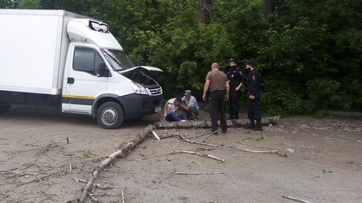 В Уфе на мужчину рухнуло дерево, пока он чинил автомобиль
