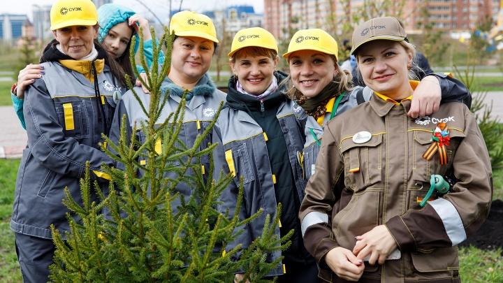 Согласно рекомендациям Роспотребнадзора: во время самоизоляции в парках высадят 500 деревьев