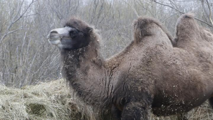 Лошади, верблюд и обсерватор: окрестности места, где лежат после контакта с больными COVID-19. Фото