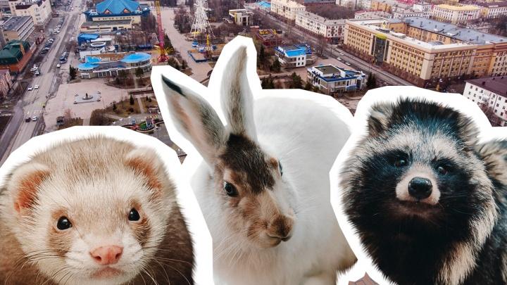 Животные большого города: кто кроме человека обитает в Тюмени