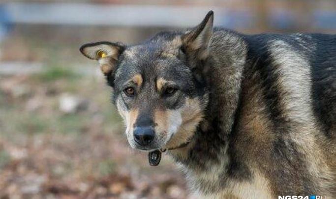 В полиции объяснили, почему отказали в возбуждении дела на живодера, забившего собаку молотком