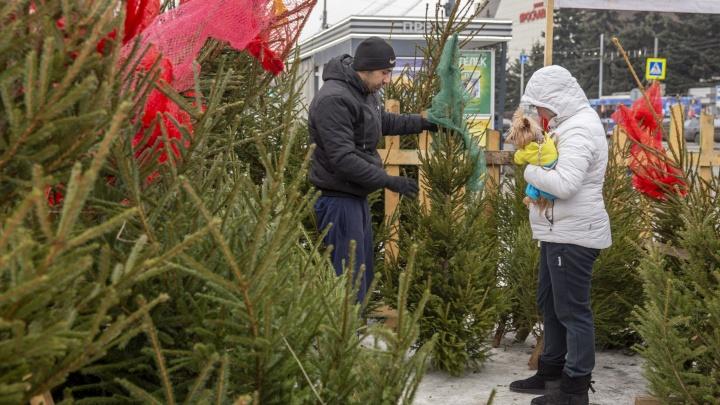 Почем праздник для народа: мы узнали цены на елочном базаре в Ярославле