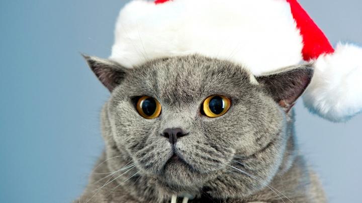 Главную кошку Челябинска на «Радио Дача» определят под Новый год